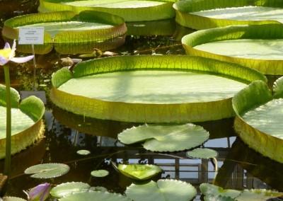 Sortie aux jardins botaniques